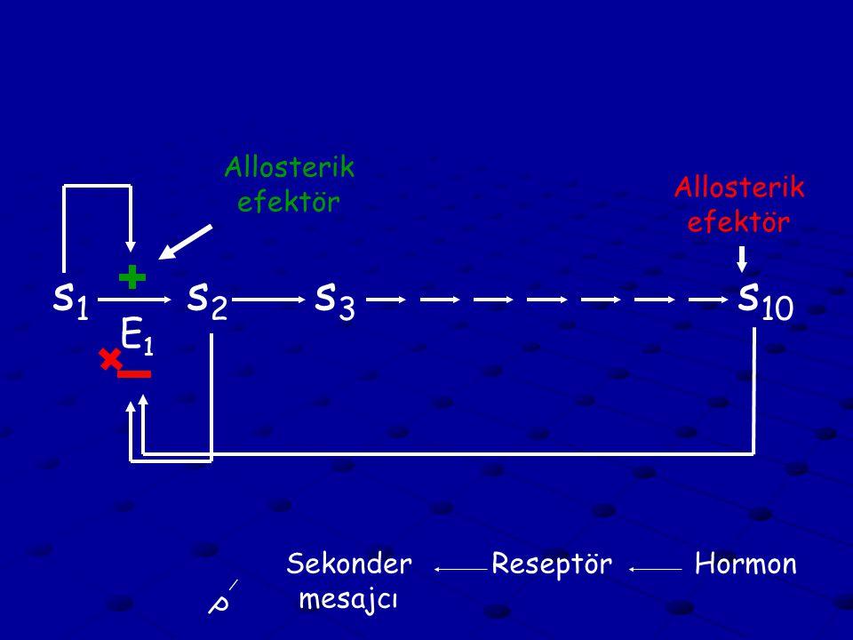 s1s1 s2s2 s3s3 s 10 E1E1 Allosterik efektör HormonReseptörSekonder mesajcı P
