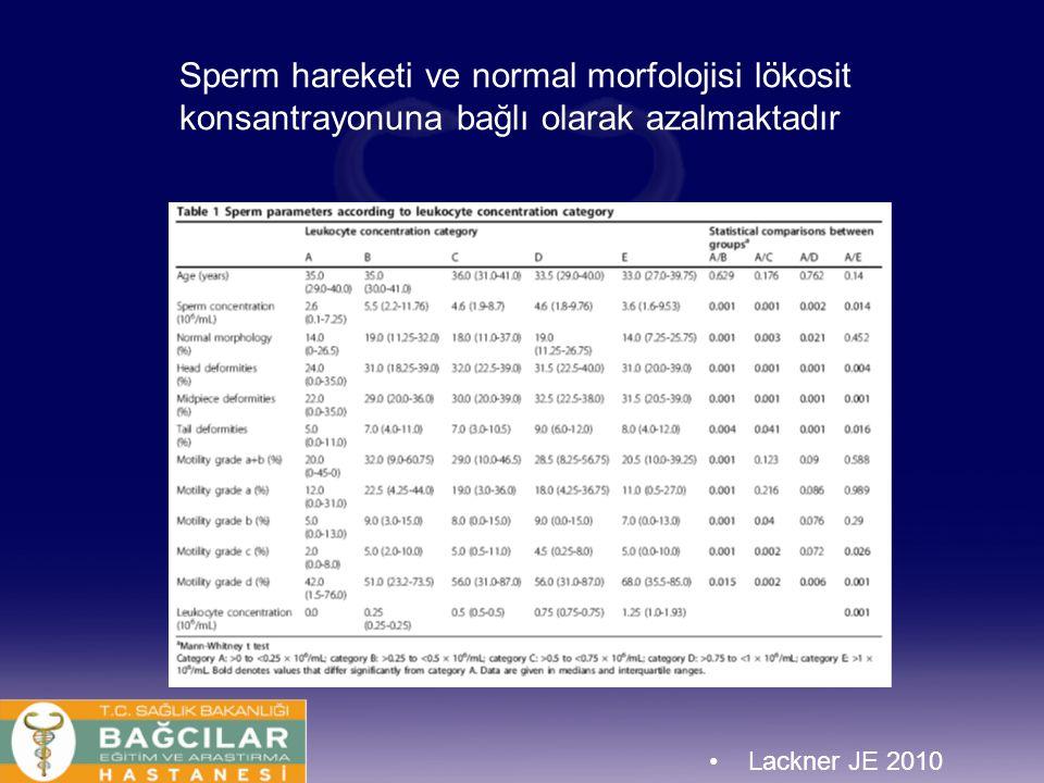 Sperm hareketi ve normal morfolojisi lökosit konsantrayonuna bağlı olarak azalmaktadır Lackner JE 2010