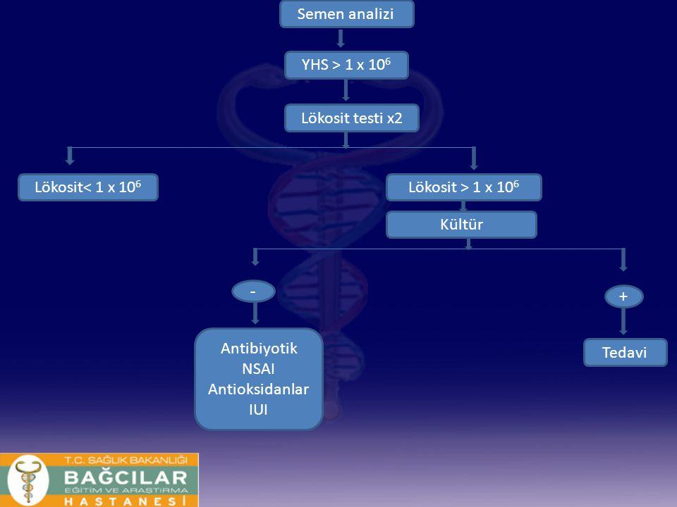 Semen analizi YHS > 1 x 10 6 Lökosit testi x2 Lökosit< 1 x 10 6 Lökosit > 1 x 10 6 Kültür + Tedavi - Antibiyotik NSAI Antioksidanlar IUI