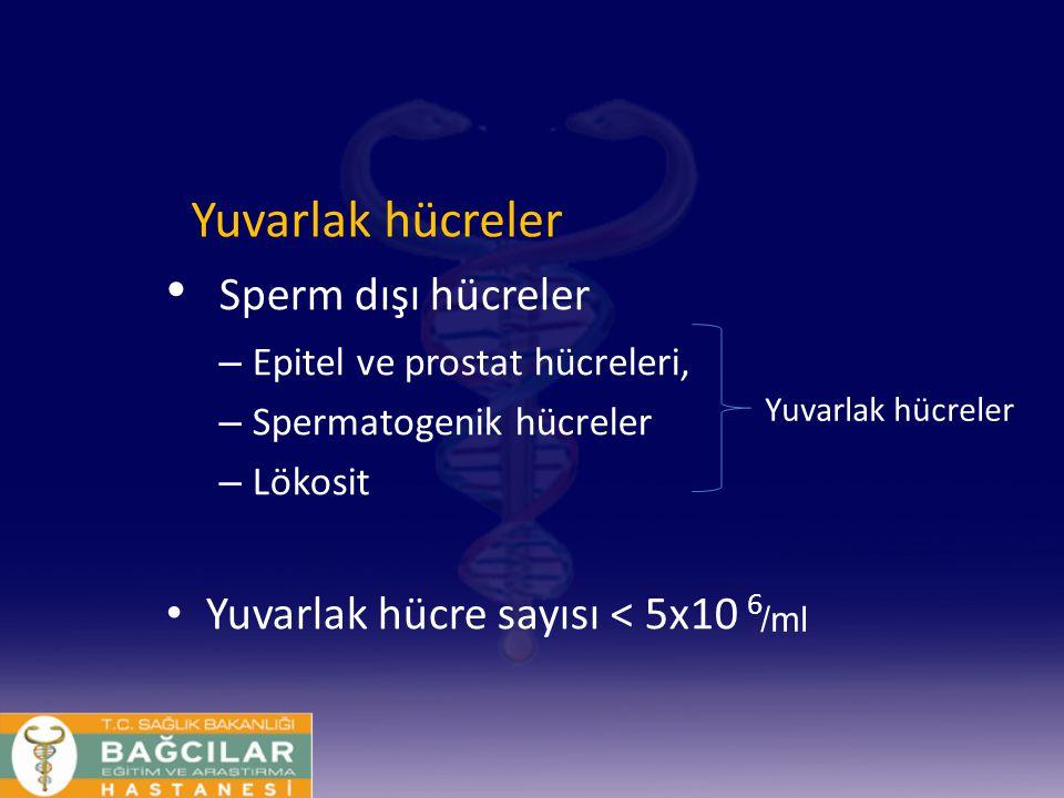 Sperm dışı hücreler – Epitel ve prostat hücreleri, – Spermatogenik hücreler – Lökosit Yuvarlak hücre sayısı < 5x10 6 Yuvarlak hücreler /ml