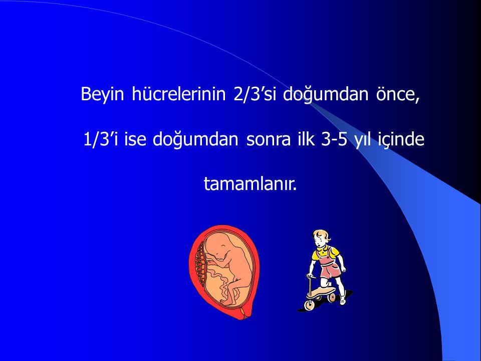 Beyin hücrelerinin 2/3'si doğumdan önce, 1/3'i ise doğumdan sonra ilk 3-5 yıl içinde tamamlanır.