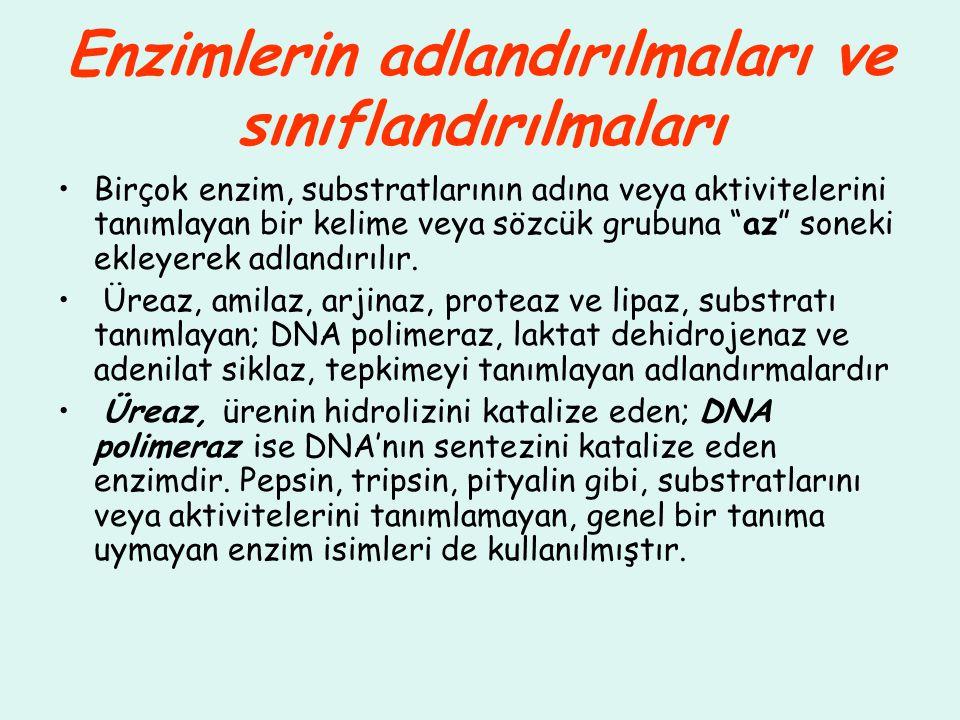 """Enzimlerin adlandırılmaları ve sınıflandırılmaları Birçok enzim, substratlarının adına veya aktivitelerini tanımlayan bir kelime veya sözcük grubuna """""""