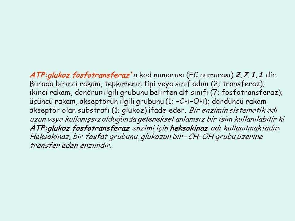 ATP:glukoz fosfotransferaz''n kod numarası (EC numarası) 2.7.1.1 dir. Burada birinci rakam, tepkimenin tipi veya sınıf adını (2; transferaz); ikinci r