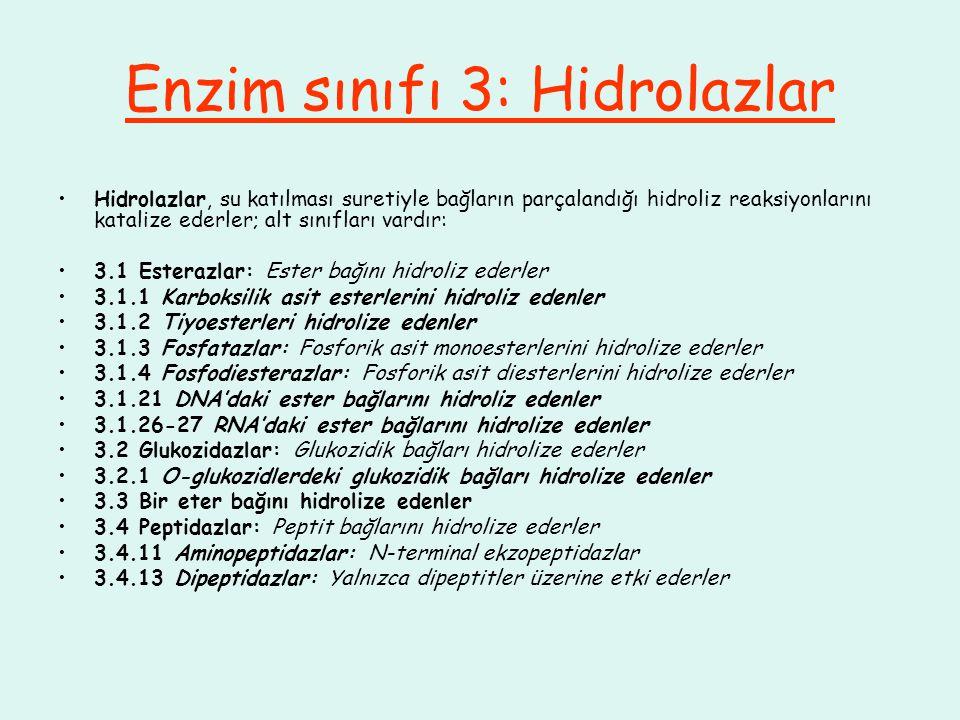 Enzim sınıfı 3: Hidrolazlar Hidrolazlar, su katılması suretiyle bağların parçalandığı hidroliz reaksiyonlarını katalize ederler; alt sınıfları vardır: