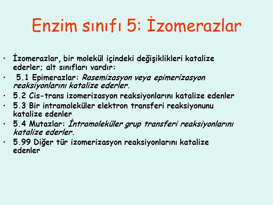 Enzim sınıfı 5: İzomerazlar İzomerazlar, bir molekül içindeki değişiklikleri katalize ederler; alt sınıfları vardır: 5.1 Epimerazlar: Rasemizasyon vey