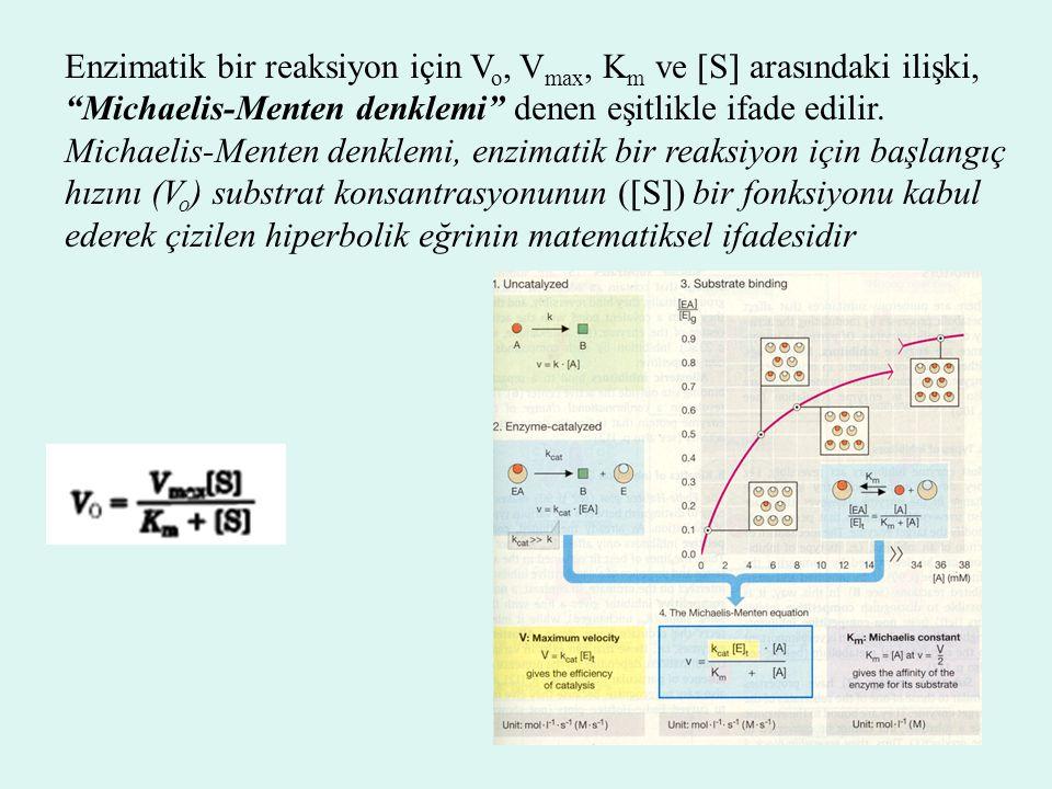 """Enzimatik bir reaksiyon için V o, V max, K m ve  S  arasındaki ilişki, """"Michaelis-Menten denklemi"""" denen eşitlikle ifade edilir. Michaelis-Menten de"""