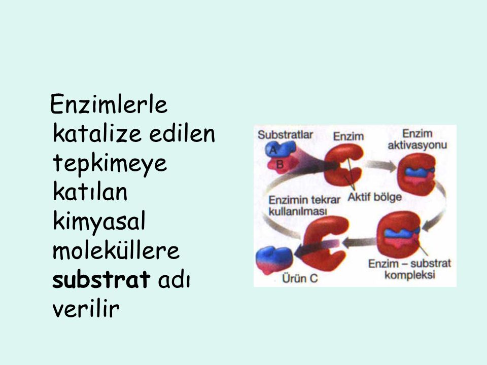 Enzimlerle katalize edilen tepkimeye katılan kimyasal moleküllere substrat adı verilir