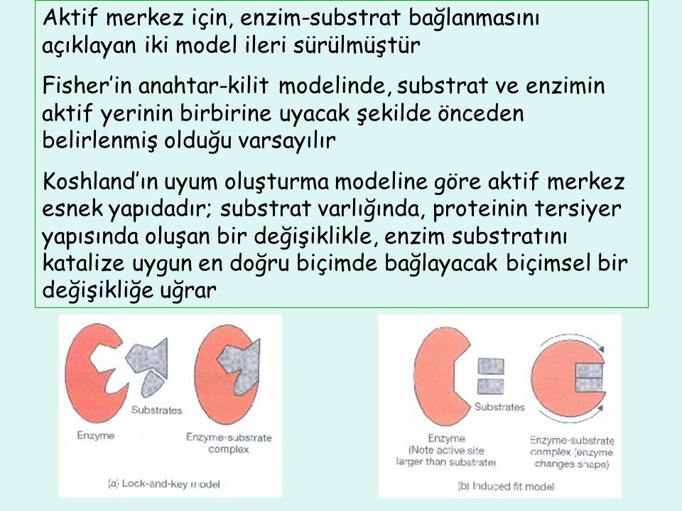 İzoenzimler (izozimler) Belli bir enzimin katalitik aktivitesi aynı, fakat elektriksel alanda göç, doku dağılımı, ısı, inhibitör ve aktivatörlere yanıtları farklı olan formlarına o enzimin izoenzimleri denir Doku spesifik izoenzimler, doku hasarının yerinin belirlenmesinde tanısal amaçla kullanılır; izoenzim aktivitelerinin bilinmesi, klinisyenler için tanı koymada yol göstericidir Kreatin kinaz (CK, CPK) enziminin üç izoenzimi önemlidir