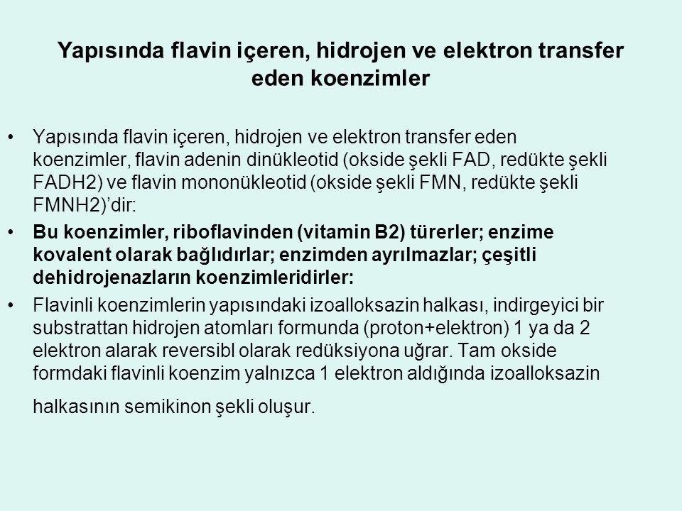 Yapısında flavin içeren, hidrojen ve elektron transfer eden koenzimler Yapısında flavin içeren, hidrojen ve elektron transfer eden koenzimler, flavin