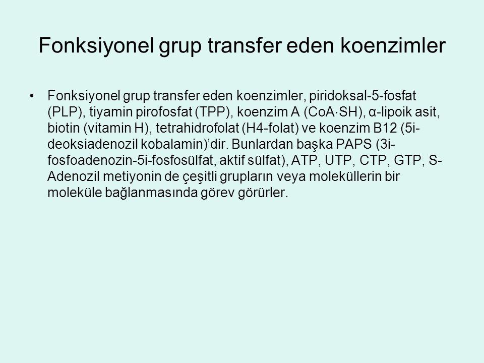 Fonksiyonel grup transfer eden koenzimler Fonksiyonel grup transfer eden koenzimler, piridoksal-5-fosfat (PLP), tiyamin pirofosfat (TPP), koenzim A (C