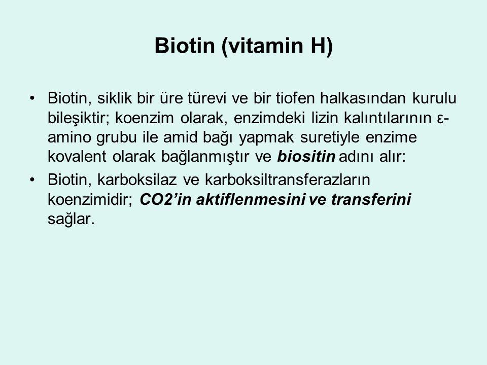 Biotin (vitamin H) Biotin, siklik bir üre türevi ve bir tiofen halkasından kurulu bileşiktir; koenzim olarak, enzimdeki lizin kalıntılarının ε- amino