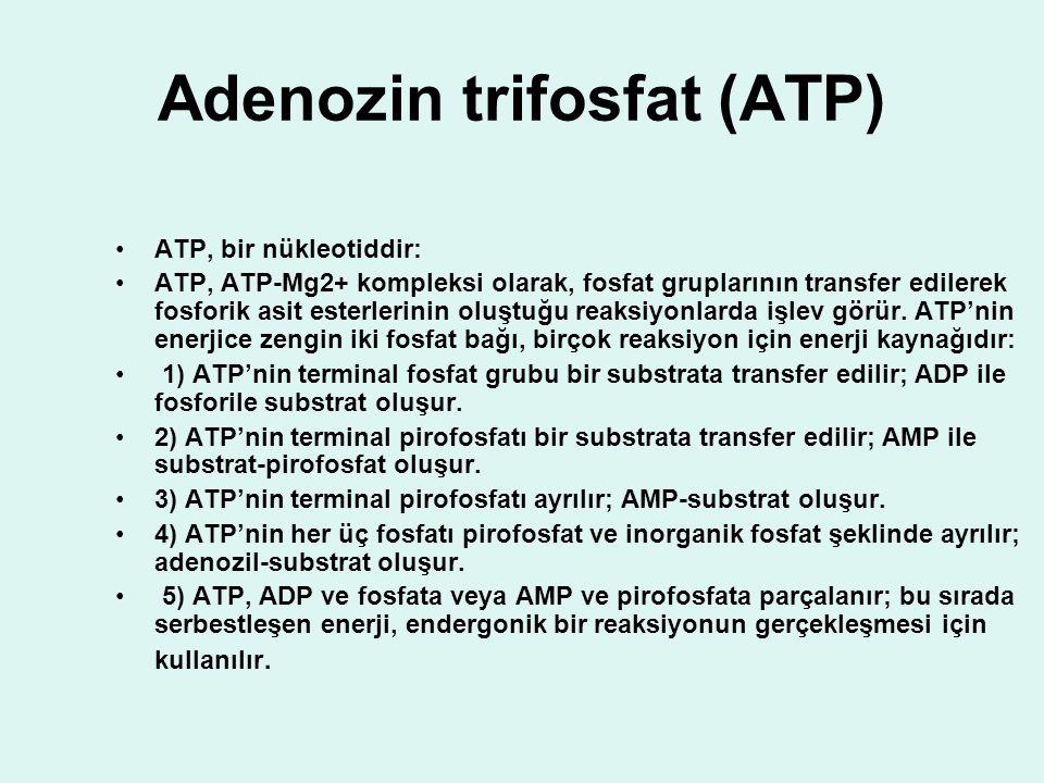 Adenozin trifosfat (ATP) ATP, bir nükleotiddir: ATP, ATP-Mg2+ kompleksi olarak, fosfat gruplarının transfer edilerek fosforik asit esterlerinin oluştu