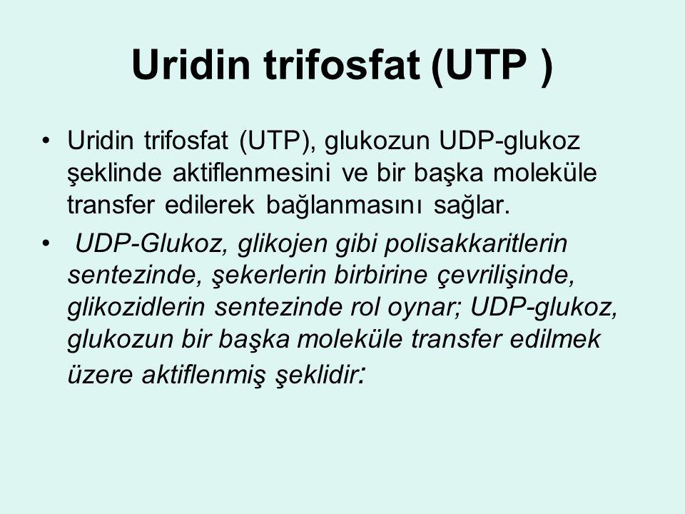 Uridin trifosfat (UTP ) Uridin trifosfat (UTP), glukozun UDP-glukoz şeklinde aktiflenmesini ve bir başka moleküle transfer edilerek bağlanmasını sağla