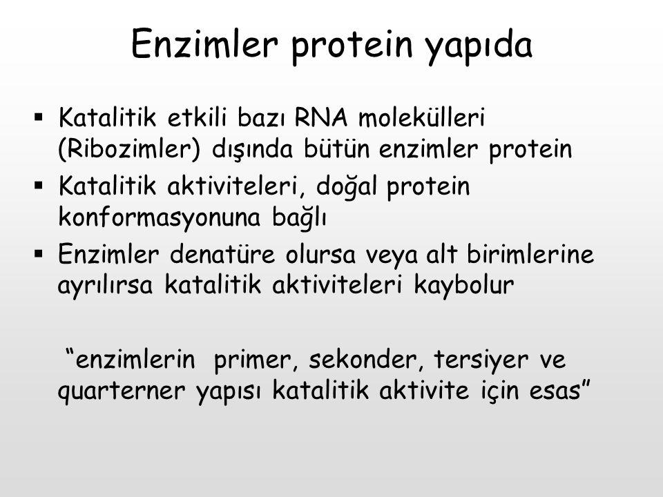 Enzimler protein yapıda  Katalitik etkili bazı RNA molekülleri (Ribozimler) dışında bütün enzimler protein  Katalitik aktiviteleri, doğal protein ko