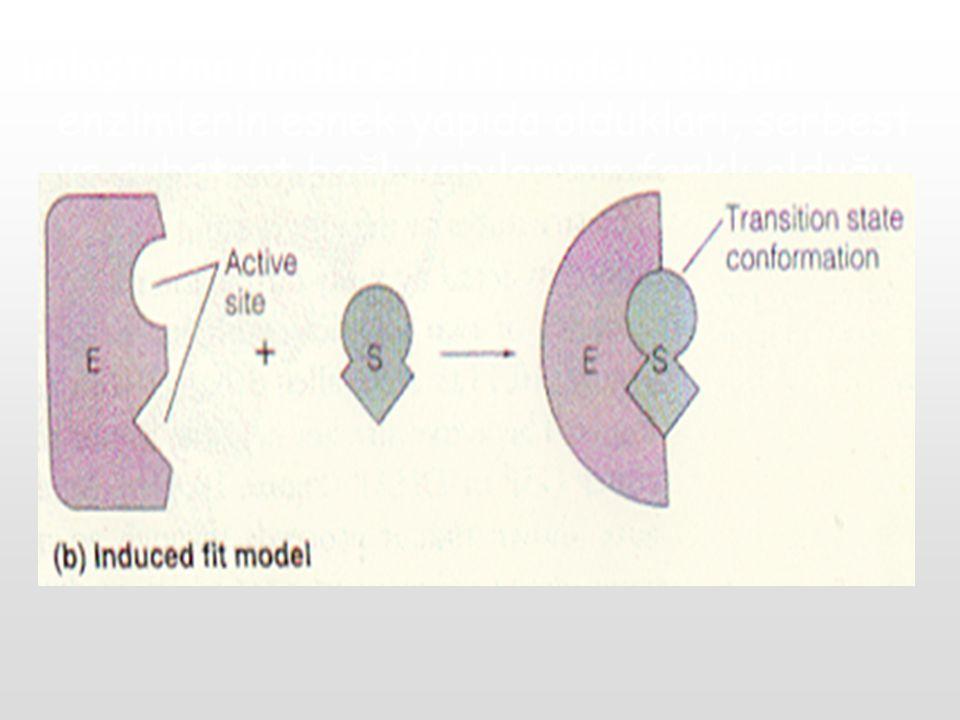 unlaştırma (induced fit) modeli; Bugün enzimlerin esnek yapıda oldukları, serbest ve substrat bağlı yapılarının farklı olduğu gösterilmiştir.