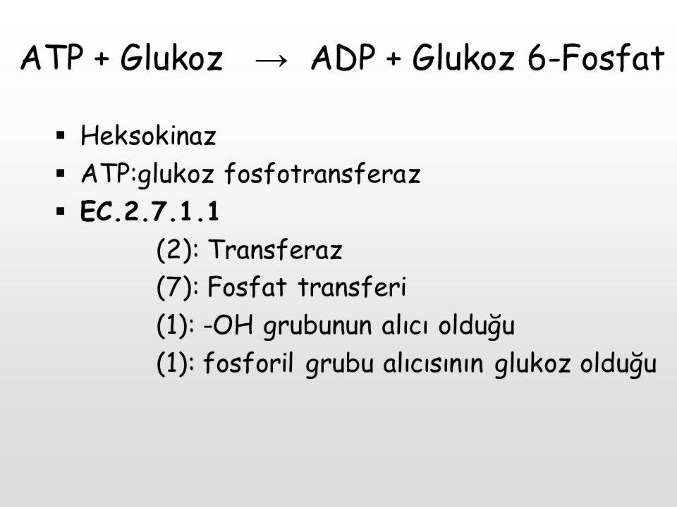 ATP + Glukoz → ADP + Glukoz 6-Fosfat  Heksokinaz  ATP:glukoz fosfotransferaz  EC.2.7.1.1 (2): Transferaz (7): Fosfat transferi (1): -OH grubunun al