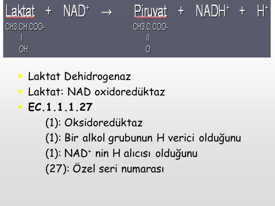  Laktat Dehidrogenaz  Laktat: NAD oxidoredüktaz  EC.1.1.1.27 (1): Oksidoredüktaz (1): Bir alkol grubunun H verici olduğunu (1): NAD + nin H alıcısı