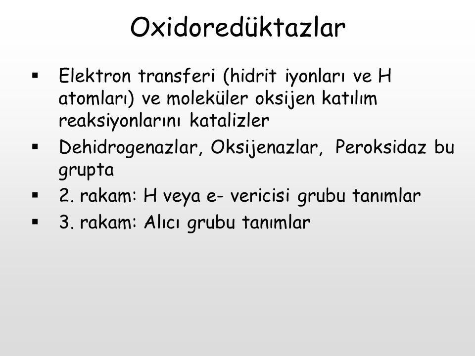 Oxidoredüktazlar  Elektron transferi (hidrit iyonları ve H atomları) ve moleküler oksijen katılım reaksiyonlarını katalizler  Dehidrogenazlar, Oksij