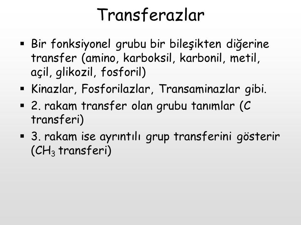 Transferazlar  Bir fonksiyonel grubu bir bileşikten diğerine transfer (amino, karboksil, karbonil, metil, açil, glikozil, fosforil)  Kinazlar, Fosfo