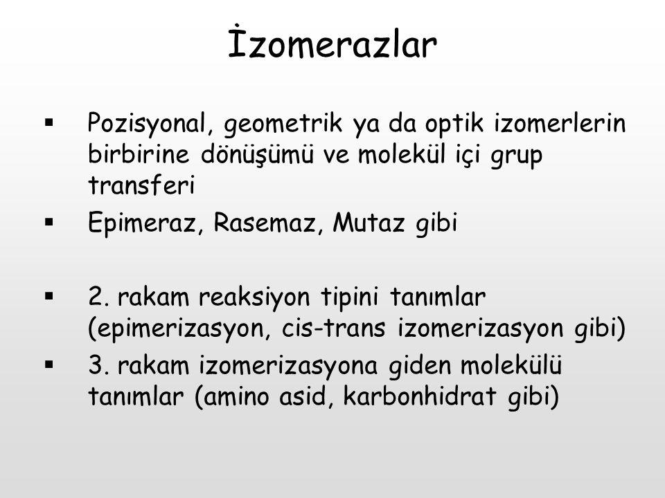 İzomerazlar  Pozisyonal, geometrik ya da optik izomerlerin birbirine dönüşümü ve molekül içi grup transferi  Epimeraz, Rasemaz, Mutaz gibi  2. raka