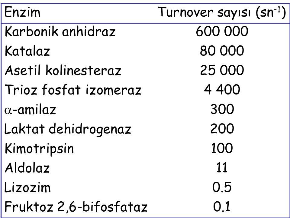 EnzimTurnover sayısı (sn -1 ) Karbonik anhidraz600 000 Katalaz80 000 Asetil kolinesteraz25 000 Trioz fosfat izomeraz4 400  -amilaz300 Laktat dehidrog