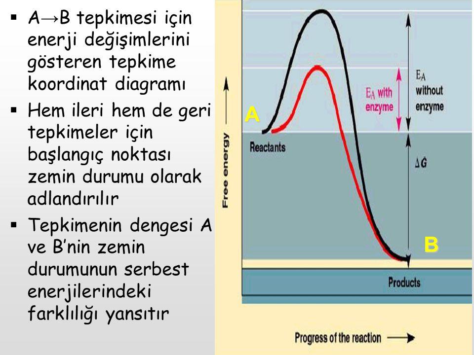  B'nin zemin durumu serbest enerjisi A'nınkinden daha düşüktür, böylece bu tepkime için standart serbest enerji değişimi(∆G) negatiftir ve denge A → B yönünü tercih eder  Ancak tercih edilen denge A → B tepkimesinin istenen hızda gerçekleşeceği anlamına gelmez A B