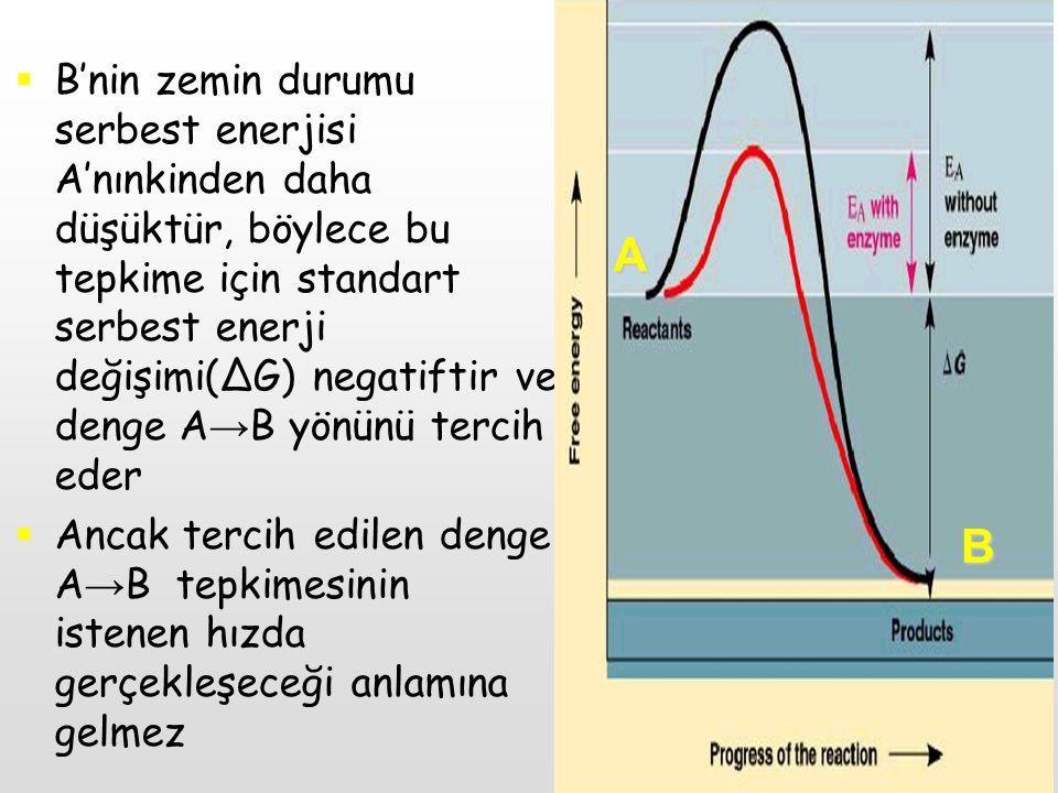  Reaksiyonların önünde bir enerji engeli var  Aktivasyon Enerjisi: Belli ısıda, 1 mol maddenin bütün moleküllerini enerji bariyerinin geçiş durumuna getirebilmek için gerekli kalori cinsinden enerji miktarı  Eğer moleküller enerji bariyerini aşarlarsa ürüne dönüşürler, aşamazlarsa geriye dönerler A B