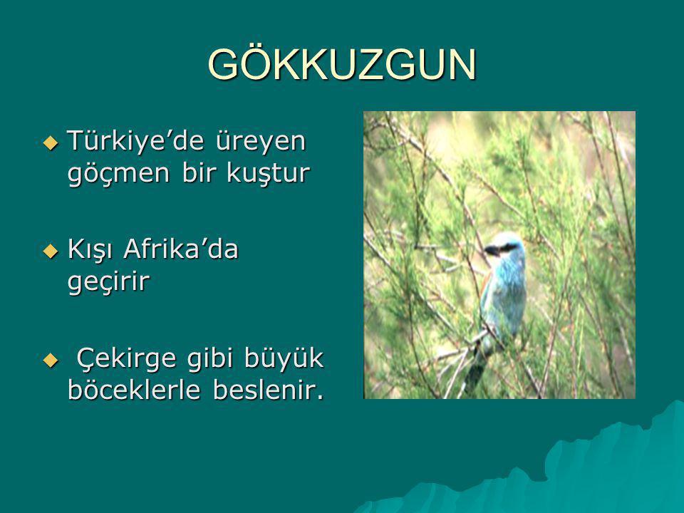 LEYLEK İki leylek türü yaşamaktadır. Beyaz leylekler Orta Avrupa, Kuzey Afrika, Türkiye ve Kore'de yaşar. Kış aylarında Orta ve Güney Afrika'ya göç ed