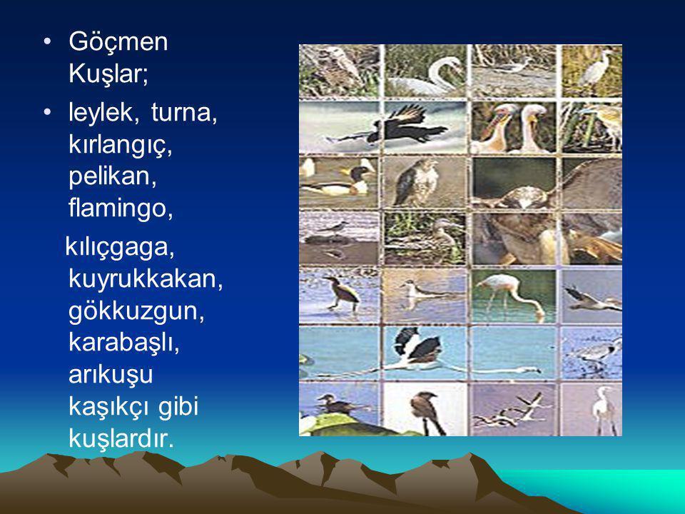 GÖÇMEN KUŞLARSonbaharda, değişen hava şartları sebebiyle iklimi daha elverişli bölgelere giderek ilkbaharda tekrar eski yerlerine dönen kuşlardır. MEY