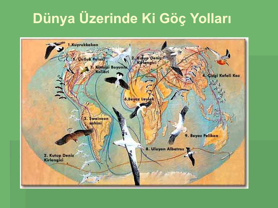 KILIÇGAGA  Türkiye'de üreyen göçmen bir kuştur.