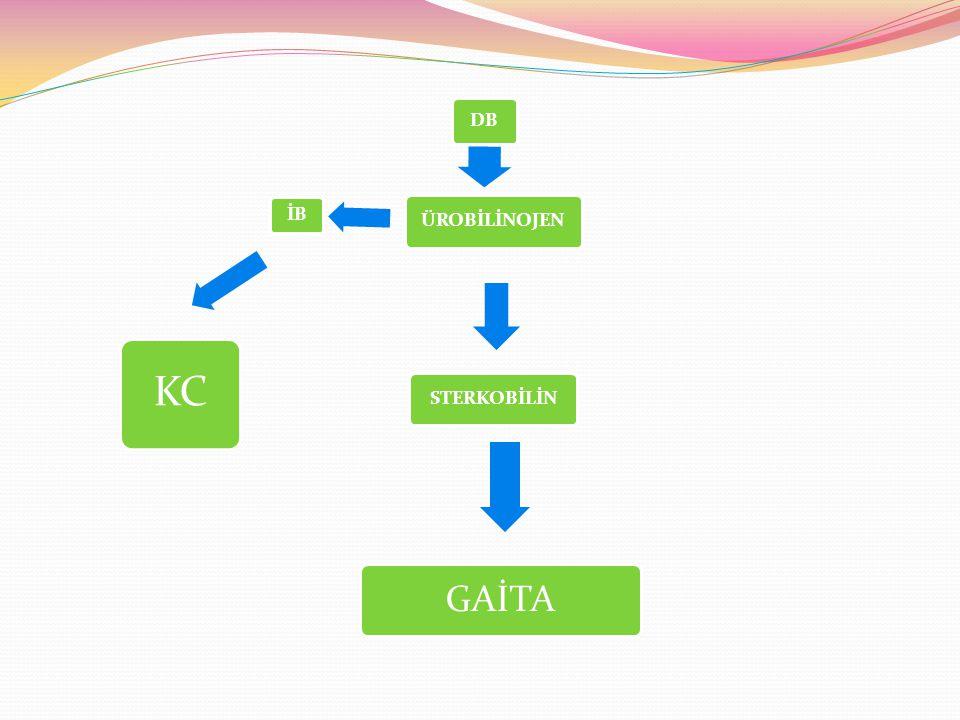 Hemolitik nedenler Özellikleri: Konjuge olmamış (indirekt bilirubin) artar, Retikülositoz >%6 Hemoglobin < 13 g/dL Coombs test pozitif: Rh uygunsuzluğu, ABO uygunsuzluğu, minör antijenler Coombs test negatif: eritrosit membran defektleri (sferositoz, eliptositoz), Eritrosit enzim defektleri (G6PD eksikliği, pirüvat kinaz eksikliği), İlaçlar (streptomisin, K vitamini) sepsis