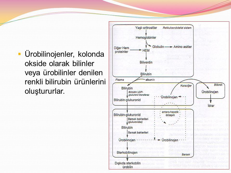 Bilirubin atılımının azalması Özellikleri: Konjuge olmamış (indirekt bilirubin) ve konjuge bilirubin (direkt) artar, Coomb's testi negatif, Konjuge bilirubin >2mg ya da total bilirubinin >%20'si, idrarda konjuge bilirubin varlığı Biliyer tıkanıklık Biliyer atrezi Koledok kisti Dubin-Johnson, Rotor sendromu İnfeksiyon Sepsis İdrar yolu infeksiyonu Neonatal hepatit Metabolik hastalıklar Alfa-1-AT eksikliği Kistik fibrozis Galaktozemi Glikojen depo hastalıkları Gaucher, Niemann-Pick hastalıkları İlaçlar Rifampin, eritromisin, kortikosteroidler Hipofiz yetersizliği