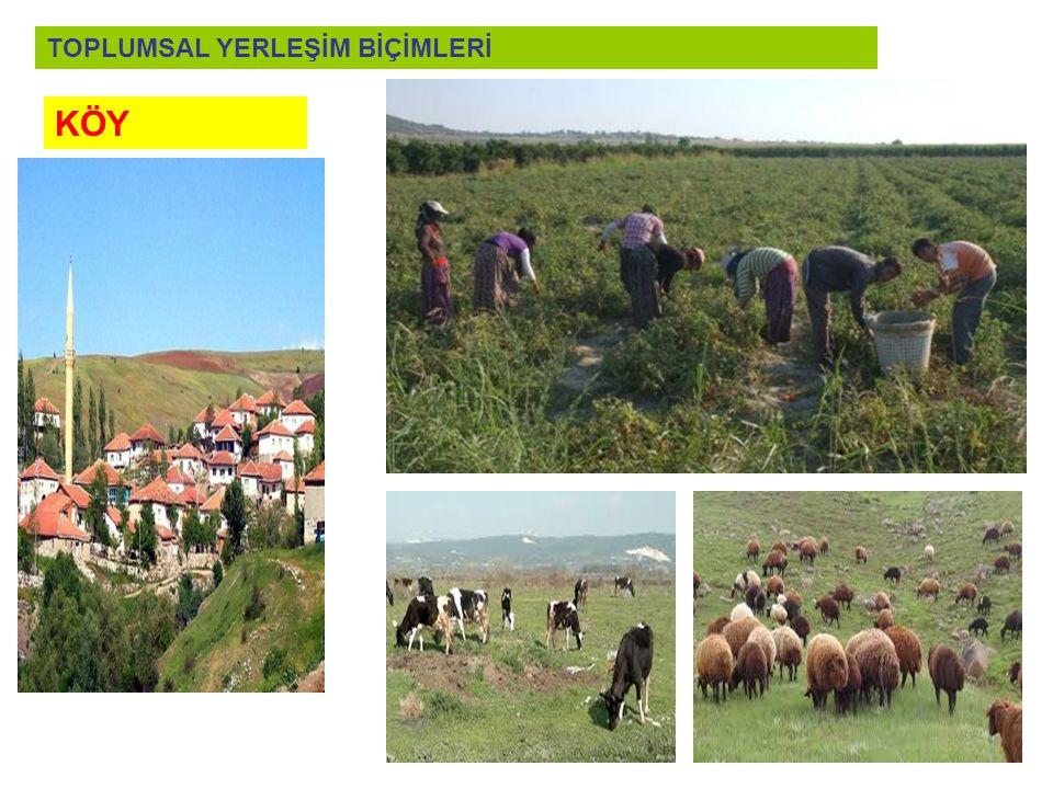 KÖY : Ekonomisinin temeli tarım ve hayvancılığın oluşturduğu küçük gruptur.