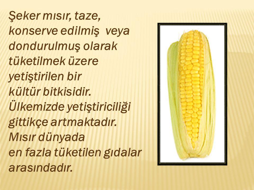 Şeker mısır, taze, konserve edilmiş veya dondurulmuş olarak tüketilmek üzere yetiştirilen bir kültür bitkisidir. Ülkemizde yetiştiriciliği gittikçe ar