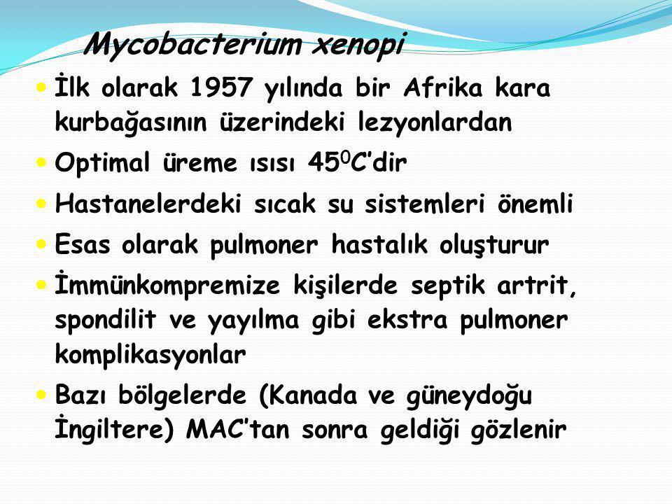 Mycobacterium xenopi İlk olarak 1957 yılında bir Afrika kara kurbağasının üzerindeki lezyonlardan Optimal üreme ısısı 45 0 C'dir Hastanelerdeki sıcak