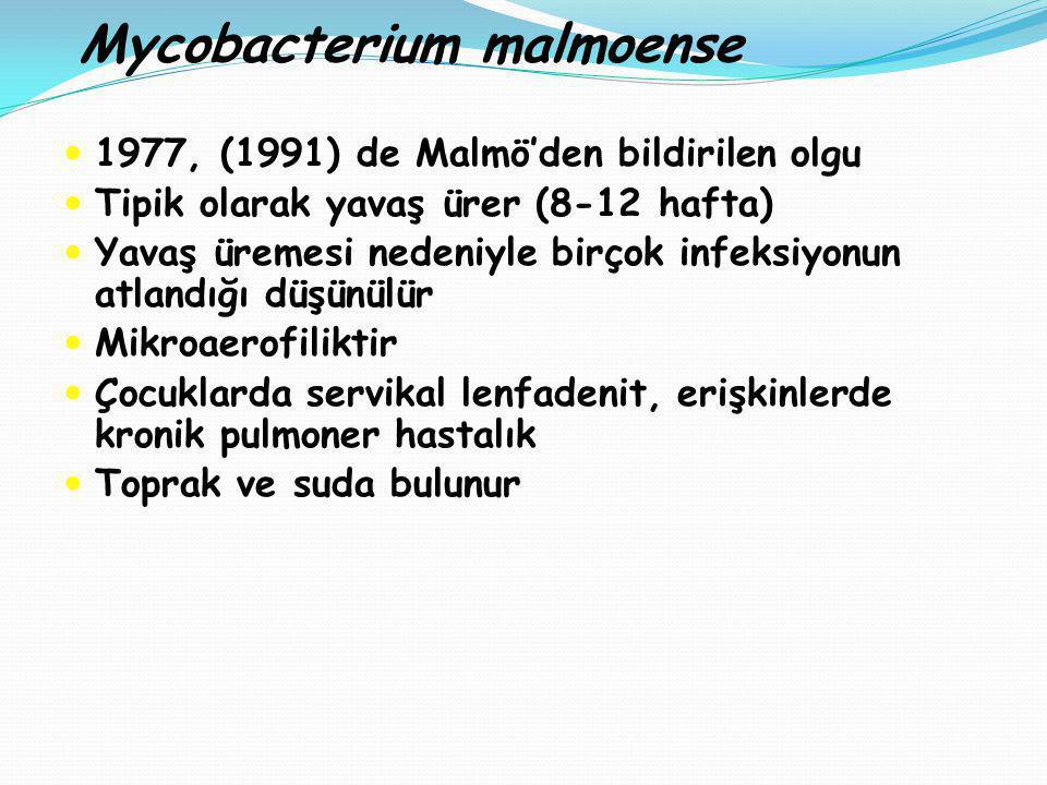 Mycobacterium malmoense 1977, (1991) de Malmö'den bildirilen olgu Tipik olarak yavaş ürer (8-12 hafta) Yavaş üremesi nedeniyle birçok infeksiyonun atl