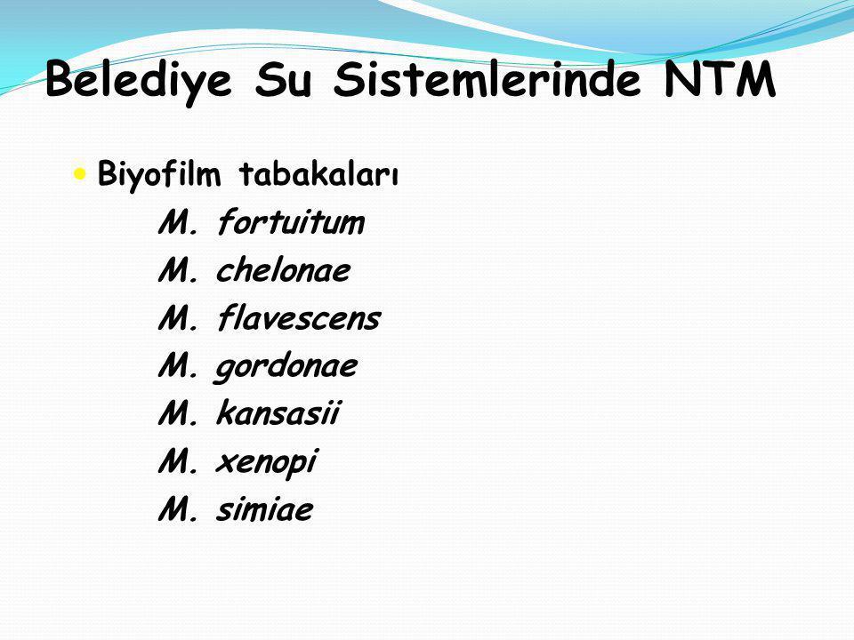 Belediye Su Sistemlerinde NTM Biyofilm tabakaları M. fortuitum M. chelonae M. flavescens M. gordonae M. kansasii M. xenopi M. simiae