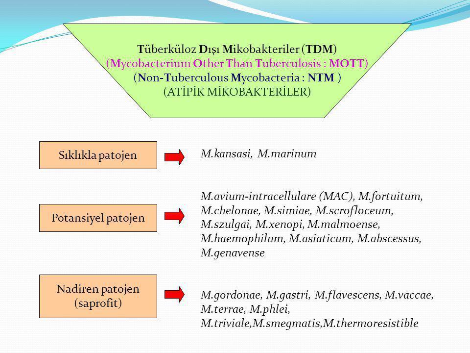 Tüberküloz Dışı Mikobakteriler (TDM) (Mycobacterium Other Than Tuberculosis : MOTT) (Non-Tuberculous Mycobacteria : NTM ) (ATİPİK MİKOBAKTERİLER) Sıkl