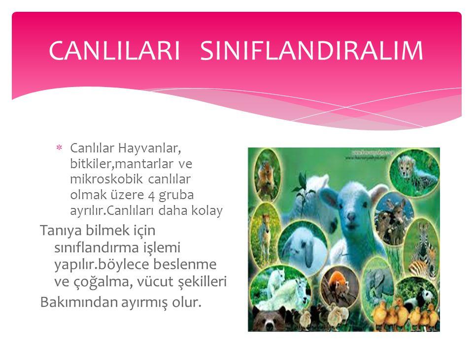 CANLILARI SINIFLANDIRALIM * Doğada canlı çeşitliliğinin Fazla oluşu, canlıların tanımlanmasını zorlaştırmaktadır.