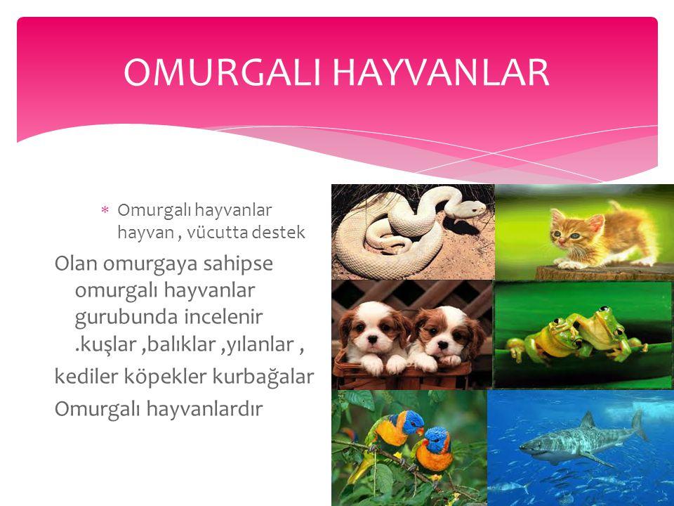 hayvanlar  Hayvanlar insanlar gibi Doğadaki bitkiler ve hayvanları yiyerek beslenir.