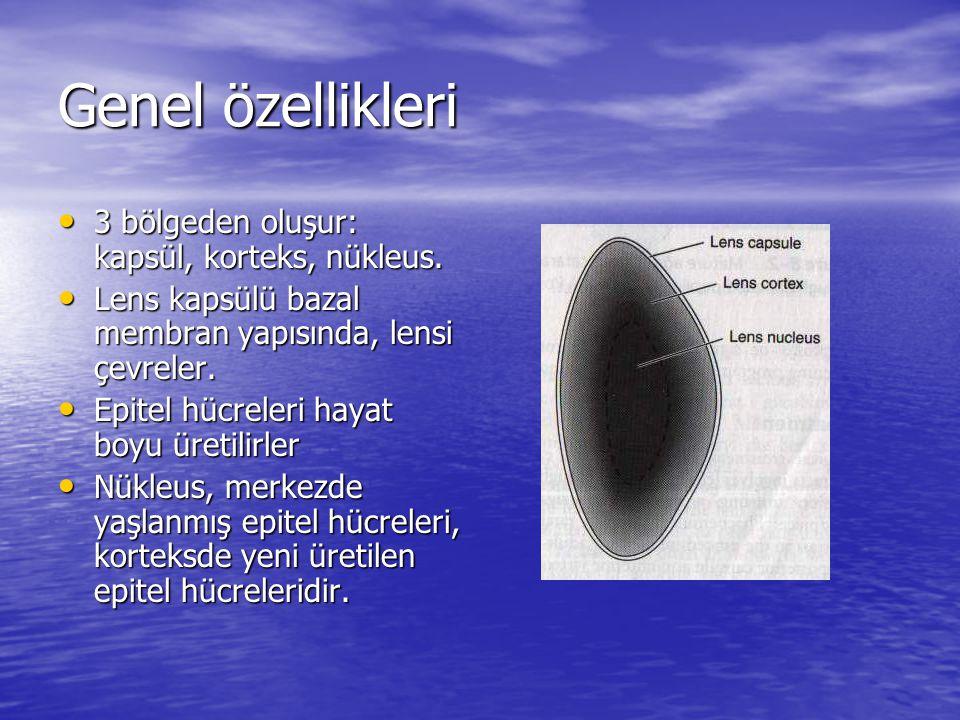 Genel özellikleri 3 bölgeden oluşur: kapsül, korteks, nükleus. 3 bölgeden oluşur: kapsül, korteks, nükleus. Lens kapsülü bazal membran yapısında, lens