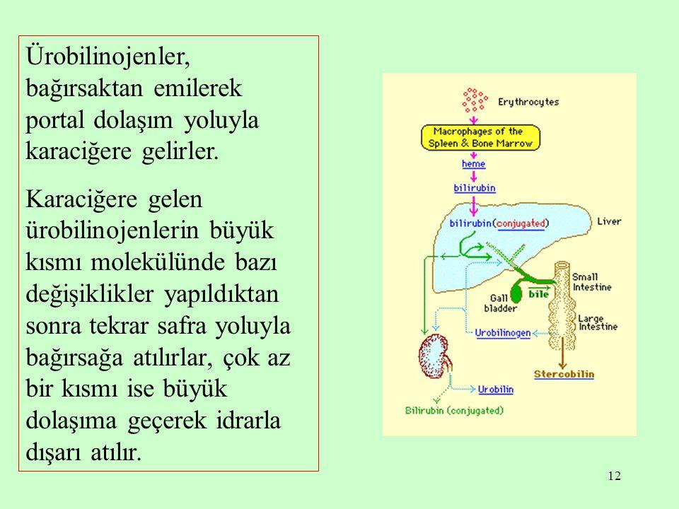 12 Ürobilinojenler, bağırsaktan emilerek portal dolaşım yoluyla karaciğere gelirler. Karaciğere gelen ürobilinojenlerin büyük kısmı molekülünde bazı d