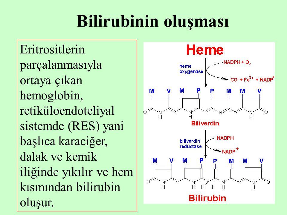 3 İnsan kanında, parçalanan eritrositler kemik iliğinde gerçekleşen abortif hemoglobin sentezi ile oluşan hemoglobin, hemoglobin olmayan hemler, karaciğerde yıkılan miyoglobin, katalaz, peroksidaz, sitokrom b 5 sitokrom p-450 de bilirubin kaynaklarıdırlar
