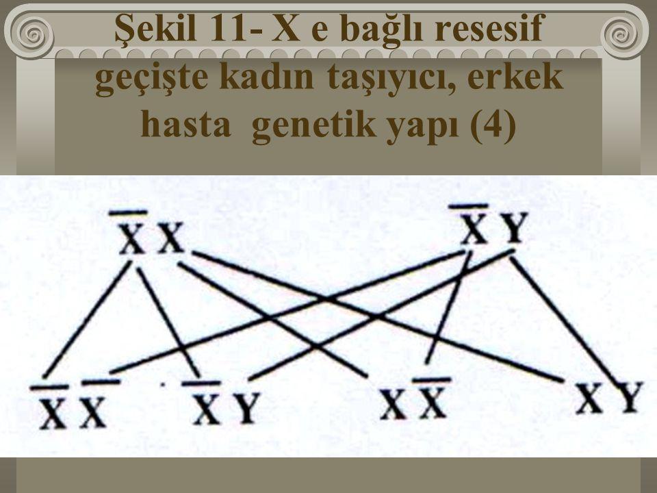 Şekil 11- X e bağlı resesif geçişte kadın taşıyıcı, erkek hasta genetik yapı (4)