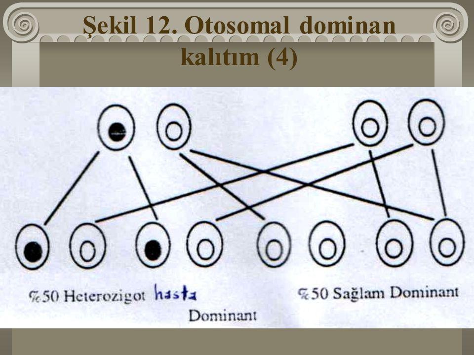 Şekil 12. Otosomal dominan kalıtım (4)