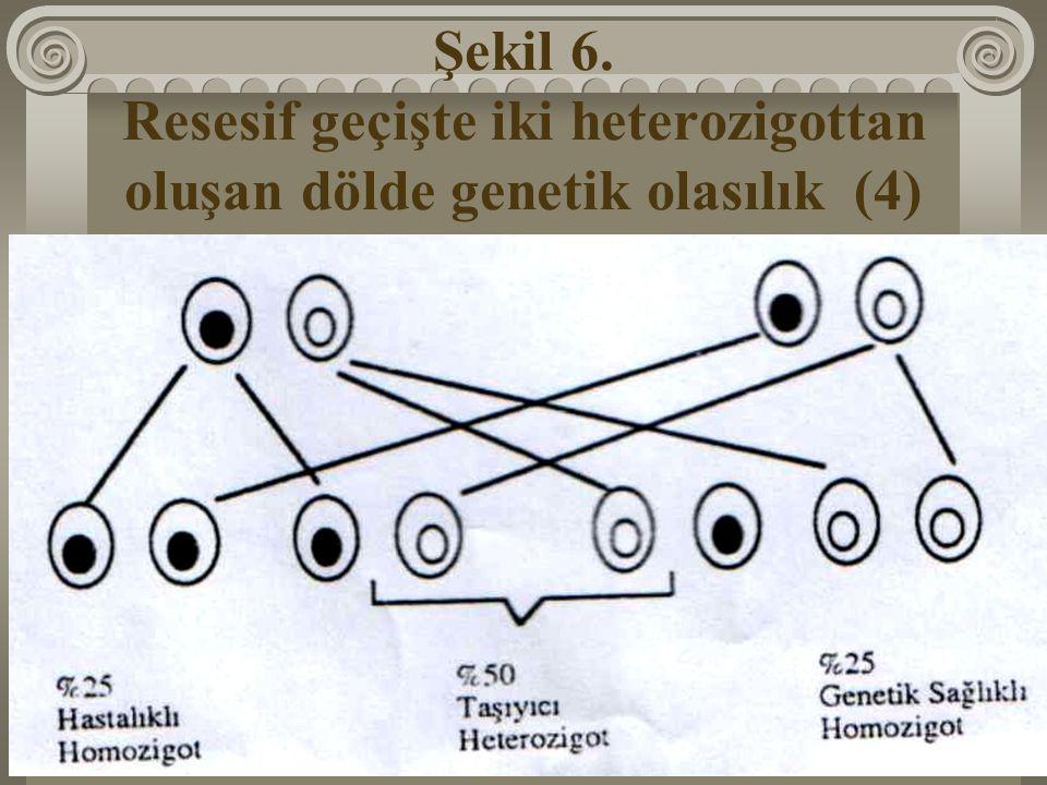 Şekil 6. Resesif geçişte iki heterozigottan oluşan dölde genetik olasılık (4)