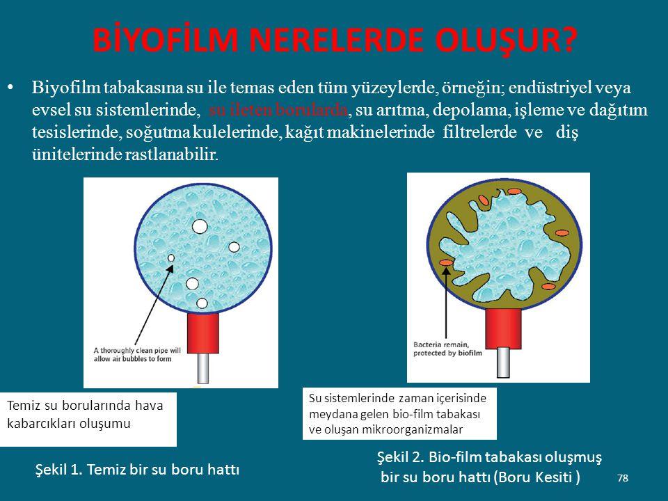 BİYOFİLM NERELERDE OLUŞUR? Biyofilm tabakasına su ile temas eden tüm yüzeylerde, örneğin; endüstriyel veya evsel su sistemlerinde, su ileten borularda