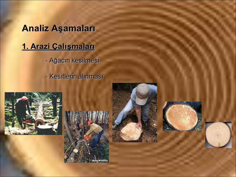 Analiz Aşamaları 1. Arazi Çalışmaları - Ağacın kesilmesi - Kesitlerin alınması
