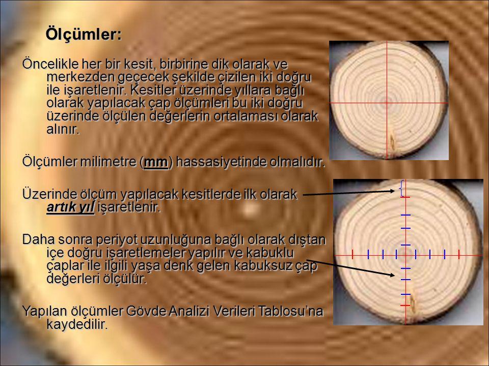 Ölçümler: Öncelikle her bir kesit, birbirine dik olarak ve merkezden geçecek şekilde çizilen iki doğru ile işaretlenir. Kesitler üzerinde yıllara bağl
