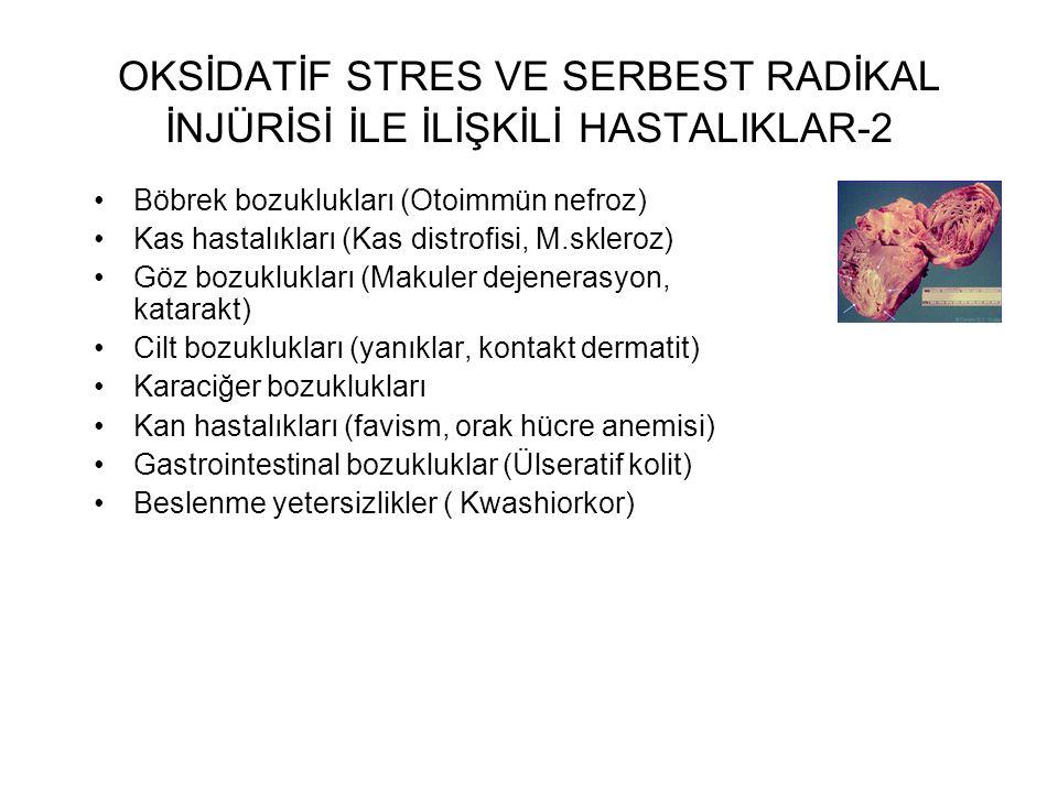 OKSİDATİF STRES VE SERBEST RADİKAL İNJÜRİSİ İLE İLİŞKİLİ HASTALIKLAR-2 Böbrek bozuklukları (Otoimmün nefroz) Kas hastalıkları (Kas distrofisi, M.skler